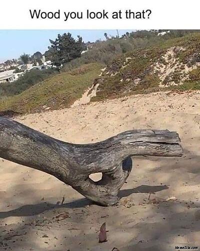 Wood-you-look-at-that-meme-4417